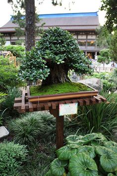 Bonsai Tree | Flickr - Photo Sharing!