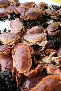 Tourteaux du Cotentin   Flickr -  www.cherbourgtourisme.com