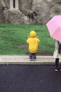 rainbow in your eyes | gifsboom:   Lion at Japan zoo tries to paw Boy...