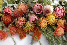 Wholesale Flowers offers Fresh Protea Mix Flowers for Sale, which is the perfect way of decorating your place for your special events. Flor Protea, Protea Plant, Exotic Flowers, Orange Flowers, Beautiful Flowers, Autumn Flowers, Cut Flowers, Protea Bouquet, Protea Flower