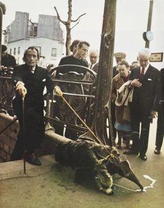 Salvador Dalí sortant du sous-sol  du subconscient  tenant en laisse un tamanoir romantique