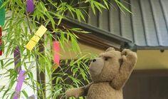 Tanabata Tanabata, Teddy Bear, Plants, Teddy Bears, Plant, Planets