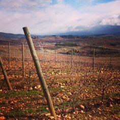Visita a la bodega y a los viñedos de #CasarDeBurbia We went to visit vineyards in #CasarDeBurbia