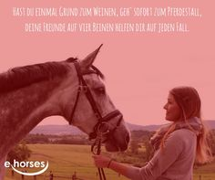 #ehorses_official www.ehorses.de