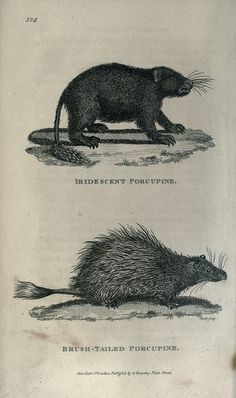 General zoology, or Systematic natural history,. London,Printed for G. Kearsley,1800-1826..