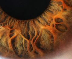 Incredible eye macros
