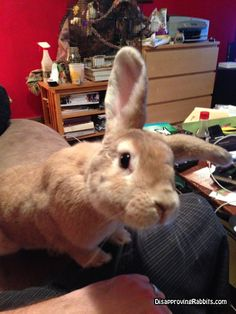 Dougal of Disapproving Rabbits. He's so sweet <3