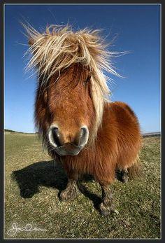 Bad hair and cuteness by David Clapp