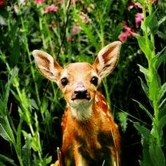 #Animallovers unite! Please voice your rights, thoughts & speak up to INDIAN CREEK RANCH! They are hunting, killing and testing deer on a beautiful nature #campground WITHOUT the members approval ! I beg of you to take 2 minutes to comment under the comments and TELL THEM TO STOP KILLING & TESTING THESE POOR INNOCENT deer on this gorgeous campground lot! I will say, I eat meat, but the testing and killing on animals without approval of the members is appauling!! This is their #home! Please support and help spread the word! Comment here: http://www.indiancreekranch.club/  #animalrights #animal #deer #nature #wildlife #aganistanimaltesting #dogs #pets #eagles #trees #aganistkilling #peta
