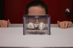 The scent of a man influences the behavior of mice and rats during experiments, increasing their stress levels and dampening their pain responses. If lab rats are scared of men but not women, that's going to skew results... and spark off some huge problems for science.     Read more at http://www.iflscience.com/health-and-medicine/male-researchers-stress-out-lab-rodents#e2XcL3QWbmcXMHc6.99
