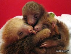 Sloth Group Hug