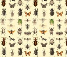 Insect_print_ed_shop_preview