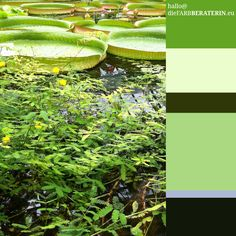 #farbinspiration #seerosenteich #farbpalette #farbprofil #farbharmonie #farbe #quantität #proportion #farbberatung #diefarbberaterin  #grün  #color #palette #scheme #inspiration #colour #consutlant #lily #pond  #green  www.diefarbberaterin.eu