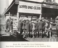 """<span class=""""caption-caption"""">School Pig Club Competitions at the Nambour Show</span>. <br />From <span class=""""caption-book"""">Queensland Agricultural Journal</span>, 1925, collection of <span class=""""caption-contributor"""">Fryer Library, UQ</span>."""