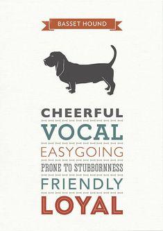 Basset Hound Dog Breed Traits Print