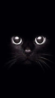 Black Cat photography-art-i-love Cool Cats, I Love Cats, Beautiful Cats, Animals Beautiful, Cute Animals, Fluffy Animals, Black Animals, Gorgeous Eyes, Amazing Eyes