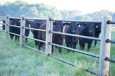 Tough enough for cattle, safe enough for horses