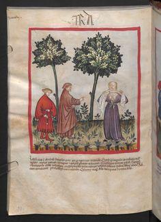 Folio 98v (page 200). Tacuinum sanitatis, Codex Vindobonensis, series nova 2644. North Italy, probably Verona, 1380-1399.