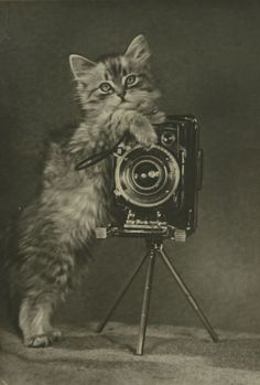 Cat with a camera Printed in Moscow, 1956