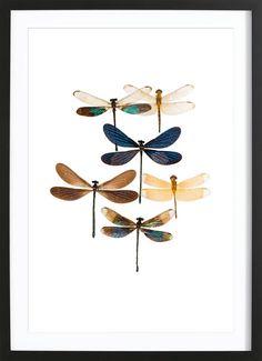 Insect 7 als Poster im Holzrahmen   JUNIQE