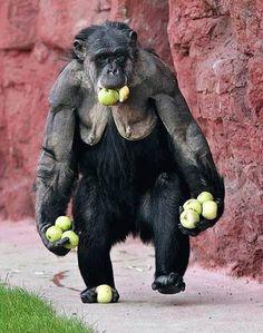 MY apples.