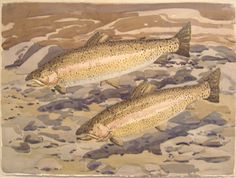 """""""Fish,"""" Neil Welliver, ca. 1970s, watercolor on paper, 22 3/16 x 29 7/8"""", Portland Museum of Art."""