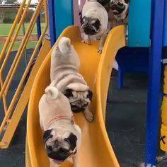 Pug at the park - Sweet Pugs Cute Pugs, Cute Funny Animals, Cute Baby Animals, Animals Dog, Funny Pug Videos, Funny Dogs, Pug Gifs, Dog Potty, Funny Animal Videos