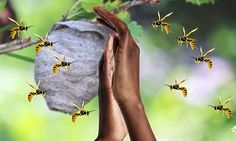 Why wasps target you and whether killing one will cause an army to swarm | Daily Mail Online