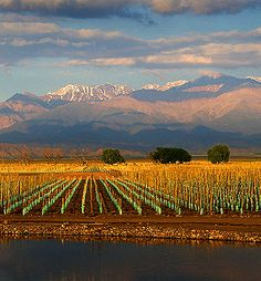 Mendoza, Argentina wine country