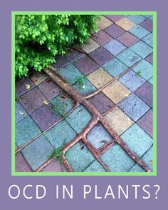 Square roots, these are so satisfying! Geometry Book, Satisfying Photos, Oddly Satisfying, Perfect Handwriting, Impressive Image, Square Roots, Tree Roots, A Perfect Circle, Creative Photography