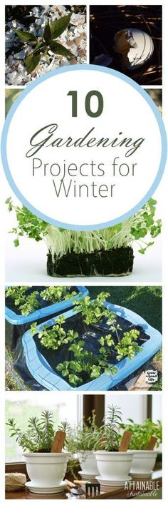 pin-10-gardening-projects-for-winter