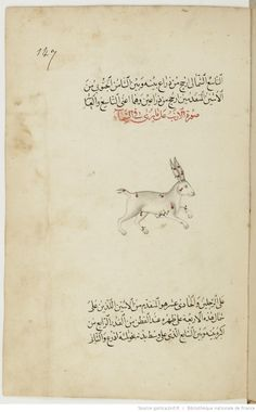 Catalog of fixed stars by'Abd al-Rahman al-Sufi Format : Paper. - 182 sheets. - Height, 23 centimeters and a half; width, 15 cm. 17 lines per page Description : الصور السمائية. صور الكواكب. كتاب الكواكب الثابتة. Al-al-samā'iyya suwar. Suwar al-Kawakib. Al-Kitab al-Kawakib Tabita Description : Ms. dated from the year 1183 AH (1770 AD). The figures are drawn with great care.