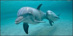Peru- Stop Killing Dolphins with Poison