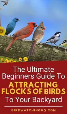 Here is the best guide to teach you how to attract birds to your backyard garden and bird feeders Step by step guide gives product ideas and recommendations along with pr. Best Bird Feeders, Garden Bird Feeders, Bird Feeder Craft, Wild Bird Feeders, Garden Birds, Garden Totems, Garden Whimsy, Garden Junk, Glass Garden