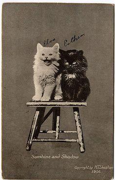 Vintage Friends, Cat People, Vintage Cat, Old Postcards, Vintage Photographs, Cat Memes, Japan, Cat Art, Pet Portraits