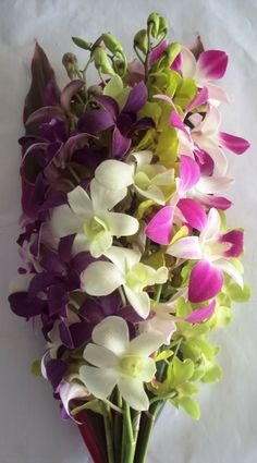 costa rican orchids