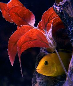 tropical fish aquariums | How to Stock a Colorful, Sustainable Aquarium | Rodale News