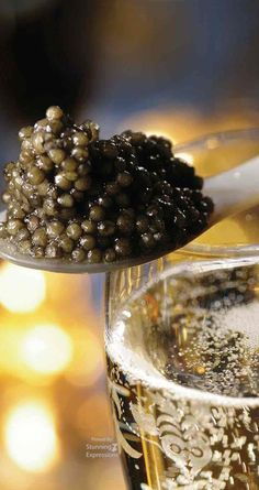 BELLA'S BROWN & GOLD HOLIDAYS -Caviar & Champagne