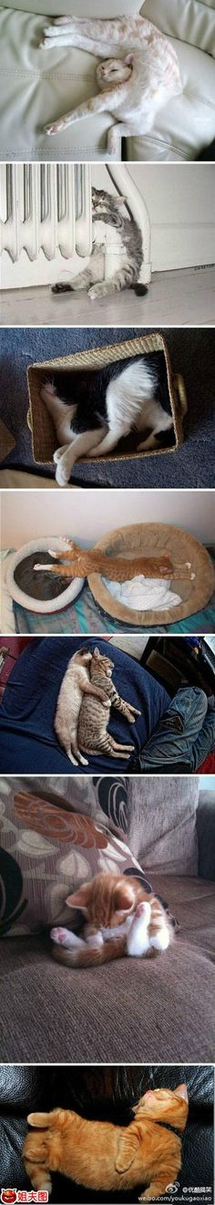 sleeping cats ~ via www.jiefutu.com