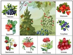 Learn Russian, Baby Toys, Montessori, Education, Fruit, Learning, Holiday Decor, Plants, Kids