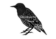 Starling Illustration Art Print of Ink Drawing by SilverRainArt, €6.50