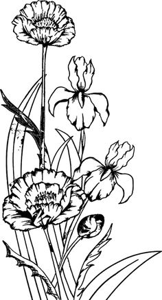 624 beste afbeeldingen van stempels bloemen in 2018 for Daisy head mayzie coloring pages
