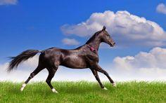 BLOG DA AMLEF: 2014, o ano do cavalo