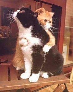 Hug ♥