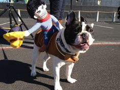 French Bulldog in a 'Rodeo Ridin' Cowboy' costume