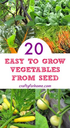 20 Easy To Grow Vegetables From Seed Plant these easy to grow vegetables from seed indoors or direct sow in the garden that also grow good on small space garden Crafty For Home Growing Vegetables From Seeds, Easy Vegetables To Grow, Easy Plants To Grow, Growing Seeds, Growing Cucumbers From Seed, Veggies, Garden Seeds, Planting Seeds, Plant Seeds Indoors