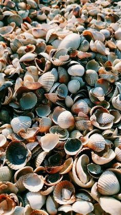 Muscheln am Strand – Muscheln am Strand – - Unique Wallpaper Quotes Tumblr Wallpaper, Iphone Mobile Wallpaper, Tier Wallpaper, Ocean Wallpaper, Cute Wallpaper Backgrounds, Animal Wallpaper, Colorful Wallpaper, Black Wallpaper, Flower Wallpaper