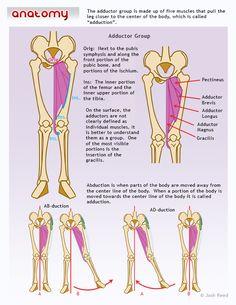 Drawsh: Anatomy