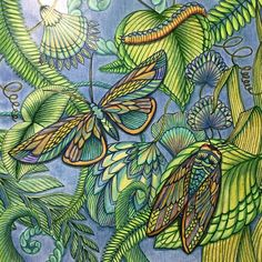 From Tropical World By Millie Marotta See This Instagram Photo Deannat Adult ColoringColoring BooksJohanna BasfordPencil ArtAnimal KingdomColor