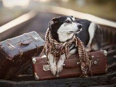 Fica Cãomigo: Mudar de casa com o meu cachorro (por Emmanuelle M...